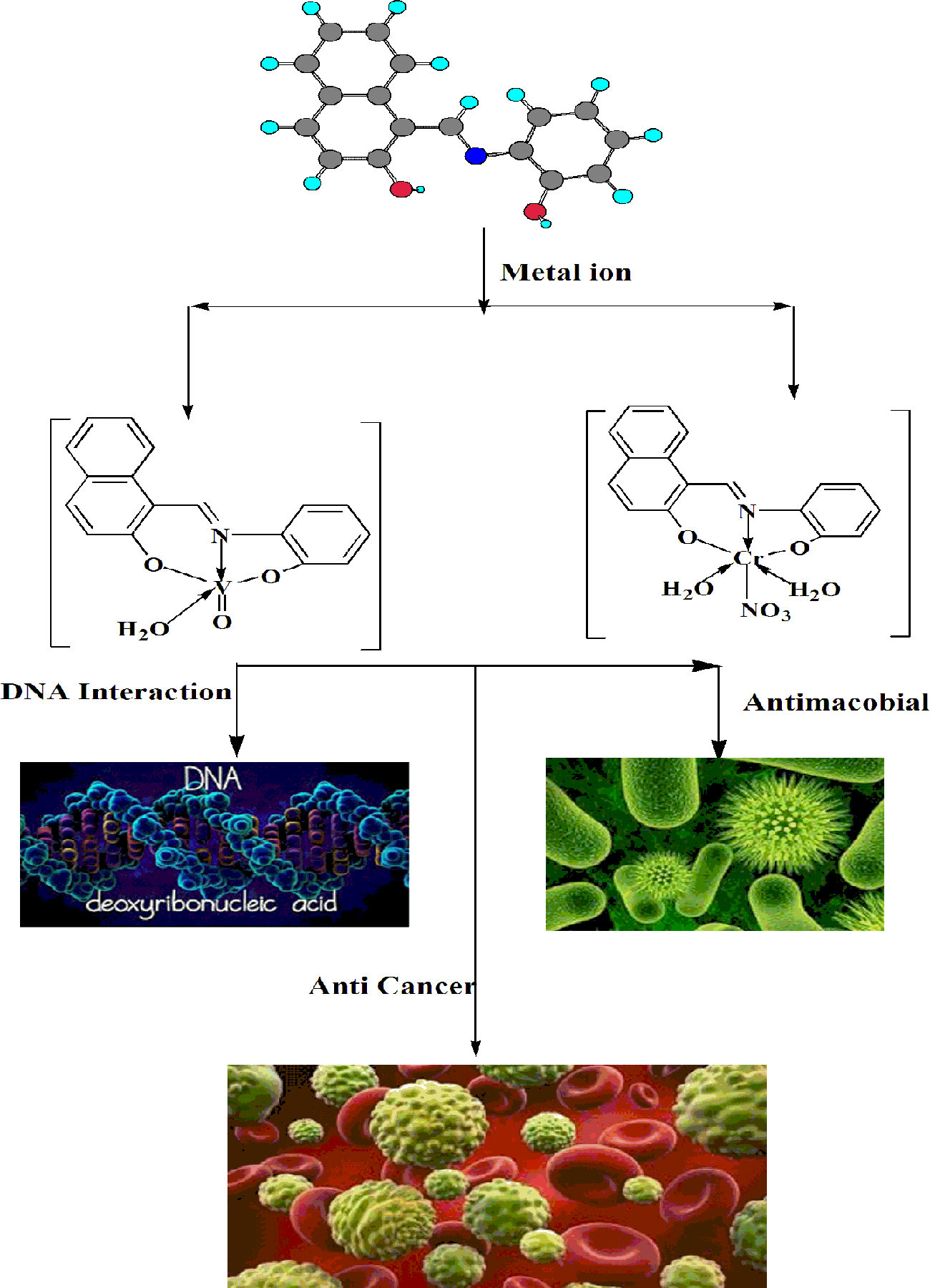 Three novel Ni(II), VO(II) and Cr(III) mononuclear complexes: Synthesis, structural characterization, DNA interaction, antimicrobial evaluation and anticancer activity