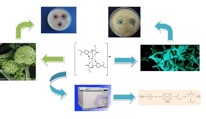 Complexation of Schiff bases incorporating of Salicylaldehyde Derivatives and Amino Acids to Copper(II) as an effective strategy for antimicrobial activity improvement, DNA Interaction and catalytic activity