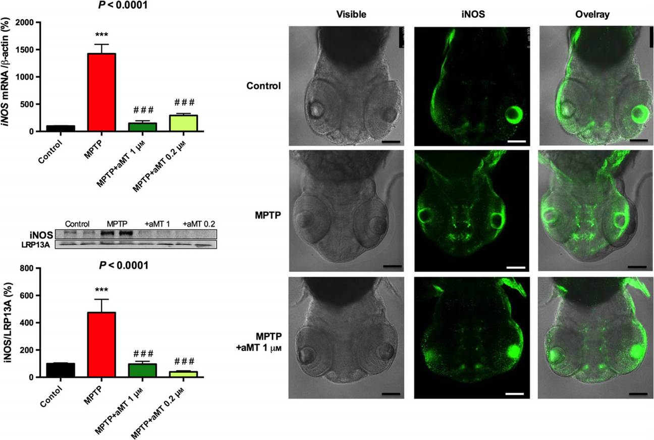 Melatonin rescues zebrafish embryos from the parkinsonian phenotype restoring the parkin/PINK1/DJ-1/MUL1 network