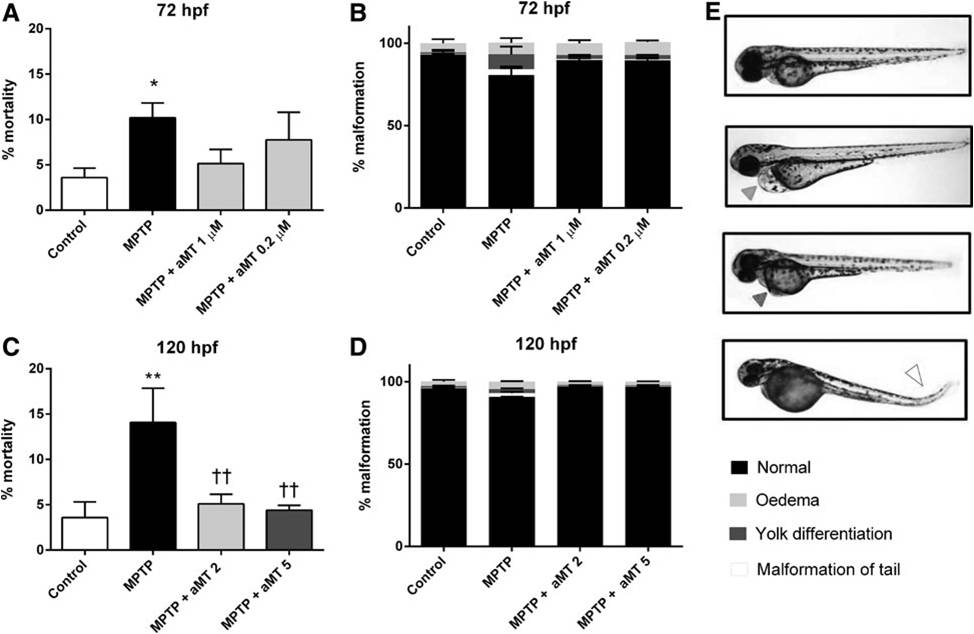 In Vivo Determination of Mitochondrial Respiration in 1-Methyl-4-Phenyl-1,2,3,6-Tetrahydropyridine-Treated Zebrafish Reveals the Efficacy of Melatonin in Restoring Mitochondrial Normalcy