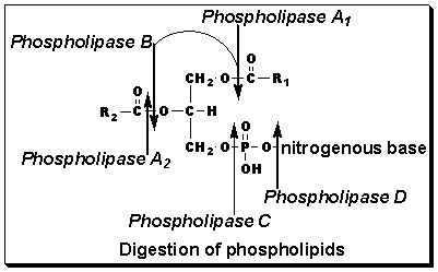 Lipid Chenistry