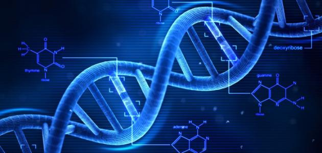 Electrochemical behavior of antioxidants: Part 3. Electrochemical studies of caffeic Acid–DNA interaction and DNA/carbon nanotube biosensor for DNA damage and protection