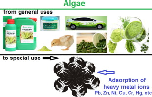 Adsorption of the heavy metal ions onto biosorbents: A review