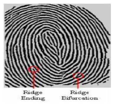 Adaptive Fingerprint Image Enhancement Based On Cascading Filtering