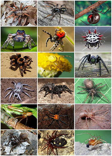 Studies on the Abundance, Temporal Distribution and Diversity of Spiders (Arachnida: Araneae) Associated with Lemon Trees in a Site at Sohag Governorate, Egypt
