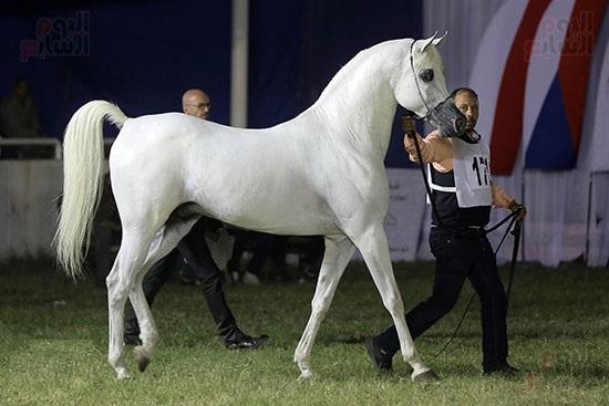إعداد بحوث مختلفة عن الخيول وأساليب رعايتها
